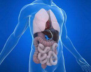 Что покажет МРТ брюшной полости